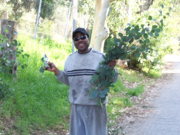 Here's my good friend  and hiking partner Keith. We just cut some Eucalyptus leaves and branches off the tree.